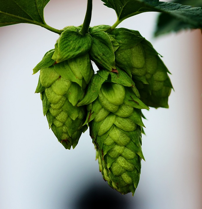 Logo of Thirsty Nomad Brewing Hops for Tomorrow