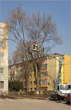 Photo: Turda - Str. Rapsodiei, Nr.6-8 - spatiu verde  - 2019.03.25