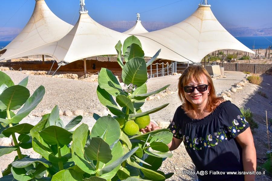 В Эйн Геди. Экскурсии в Израиле.