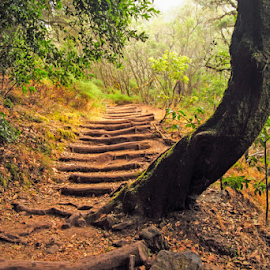 Stairway in the forest by Jose Luis Mendez Fernandez - Nature Up Close Trees & Bushes ( wild, stairs, tree, stairway, forest,  )