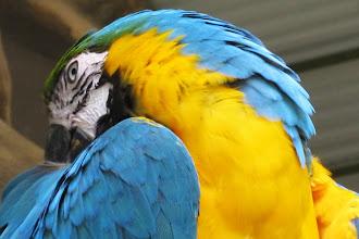 Foto: Färgglad papegoja...