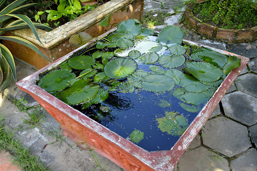 vietnam-lily-pads.jpg - A beautiful lily pond pool at a private home building when the French occupied Vietnam.