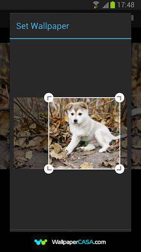 玩免費娛樂APP|下載動物壁紙 HD app不用錢|硬是要APP