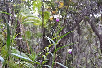 Photo: orchidee