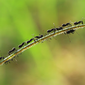 Together by Rizki Mayendra - Animals Insects & Spiders (  )