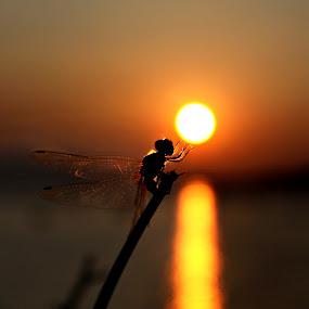 Wish by Dipankar Borah - Abstract Macro ( water, stick, dragon fly, sun )