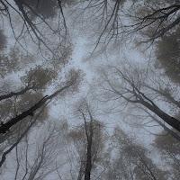la nebbia è fitta e piena di luce, e talvolta di voci. di
