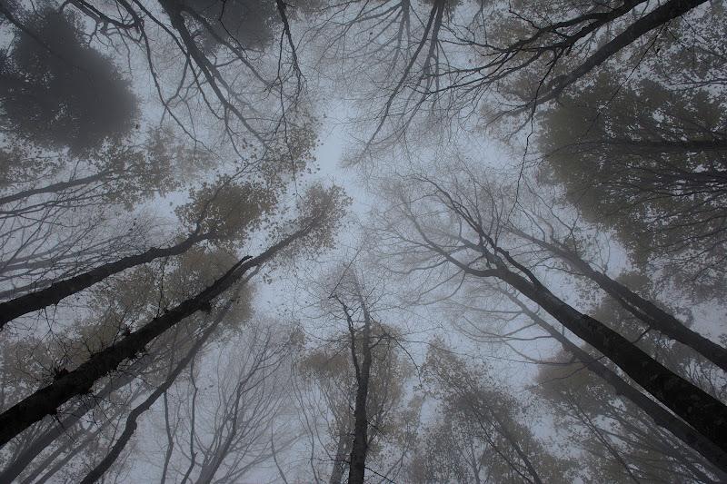 la nebbia è fitta e piena di luce, e talvolta di voci. di christiandeledda