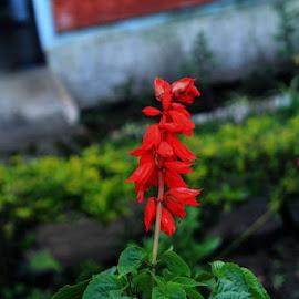 by MasHeru Sucahyono - Flowers Flowers in the Wild