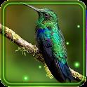 Colibri Spring 3D LWP icon
