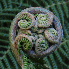 by Clare Draper - Nature Up Close Other plants