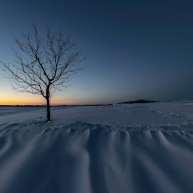 Loner I. by Martin Namesny - Nature Up Close Other Natural Objects ( alone, snow, frost, west, tree, minimalist, winter, lonely )