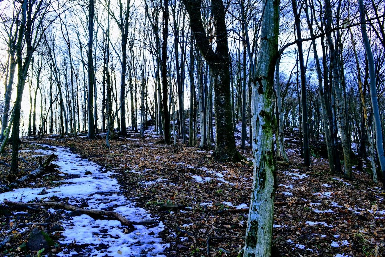 Téli Börzsöny trail