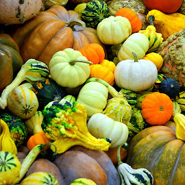 by Andrew Piekut - Public Holidays Thanksgiving