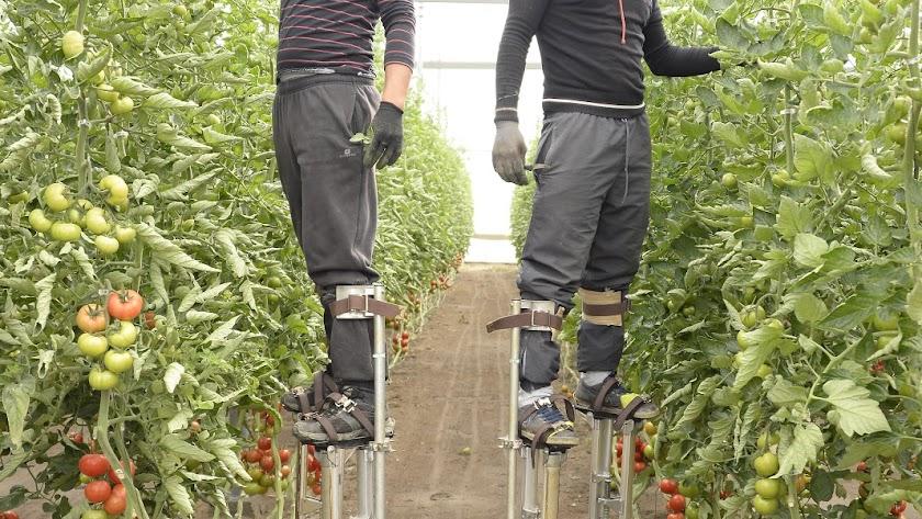Nueve de cada diez agricultores y ganaderos en Andalucía son mayores de 41 años