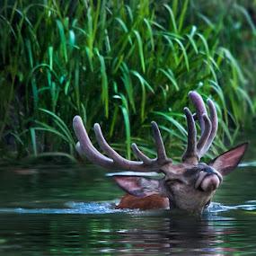 pleasure by Zlatko Borenovic - Animals Other Mammals (  )