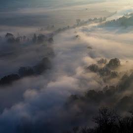 Morning mist by Pietro Ebner - Landscapes Prairies, Meadows & Fields ( tree, fog, sunset, trees, morning, mist,  )