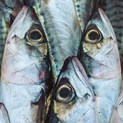 Occhi da Pesce. di MicheleCarrano
