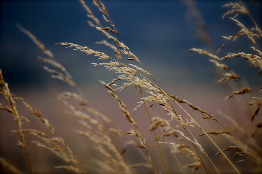 by Rachel Mez - Nature Up Close Leaves & Grasses