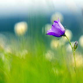 Pure by Marius Turc - Flowers Flowers in the Wild ( apuseni, nature, green, colors, flower )