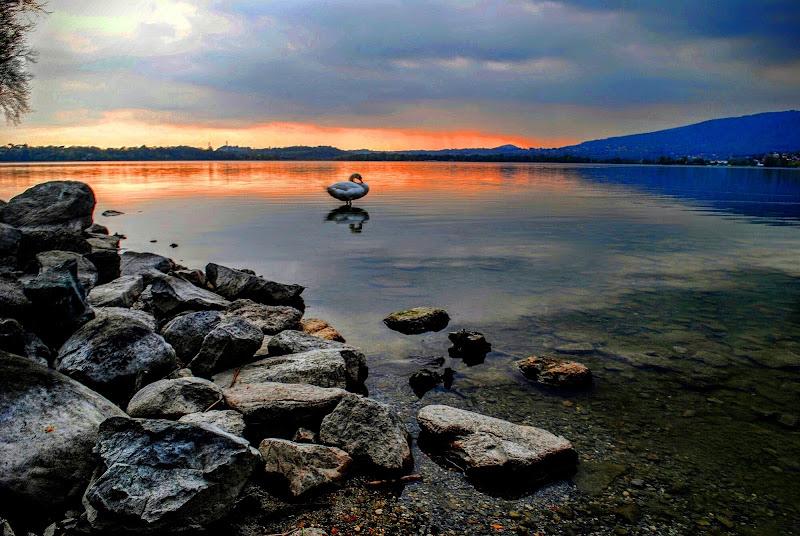 Cigno al tramonto di domo_papaluca