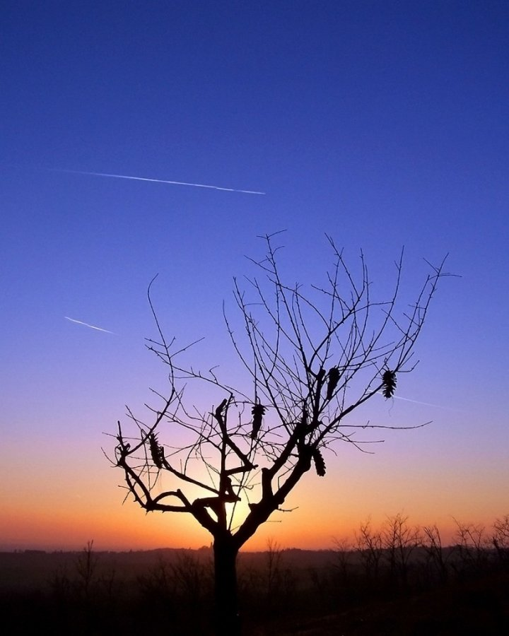 L'albero e il Cielo di merlino