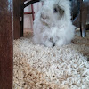This is a one cute rabbit