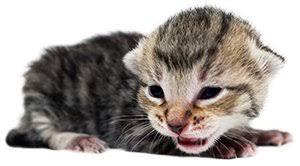 One week old cat