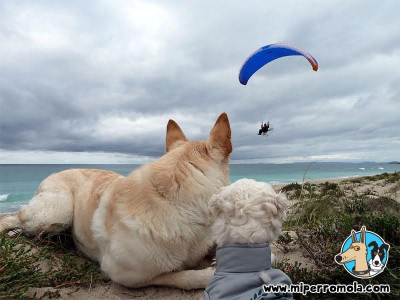 Senderismo con Perro Complejo marismeño-lagunar de Baldaio, A Coruña con un Can de Palleiro y un Border Collie