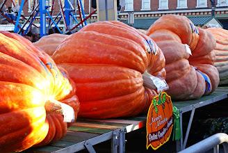 Photo: Prettiest large pumpkins