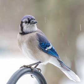 by Kathy Jean - Animals Birds (  )