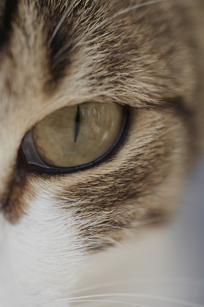 occhio di gatto! di L3iC4