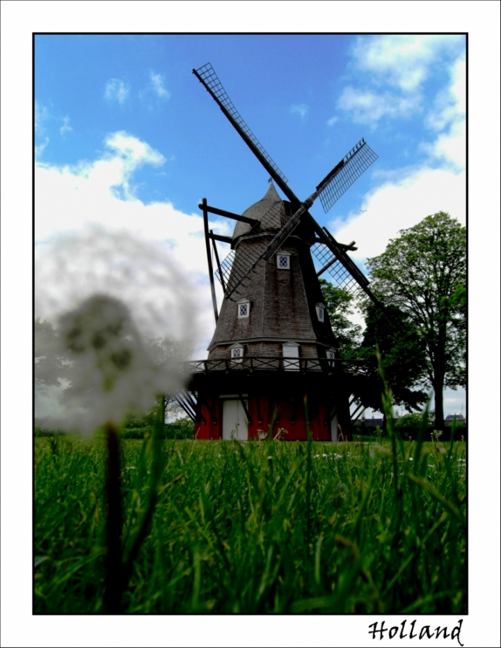 Typical holland di babi83