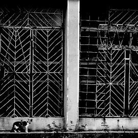 crisis by Cornel Gingarasu - Black & White Buildings & Architecture ( modern, shop, animl, cat, life, iconic, black and white, closed shop, pet, bars, crisis, drama )