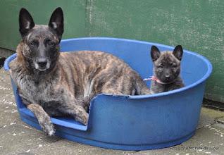Photo: Pup Kyra met haar moeder Femke