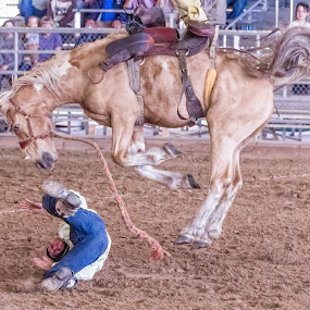 Bronco Bustin' by Courtland Roberts - Sports & Fitness Rodeo/Bull Riding