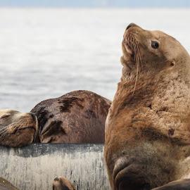 by Brenda Baird - Animals Sea Creatures