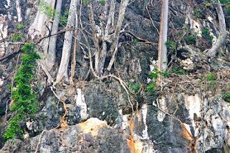 Photo: Найдите обезьян