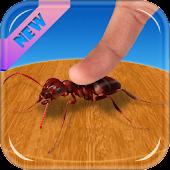 نملة سحق هوس