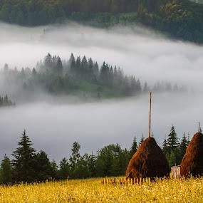 fog by Sorin Tanase - Landscapes Mountains & Hills ( fog, bicaz, forest, sunrise, light )