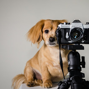 Instagram your dog
