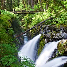 Sol Duc Falls by Dan Shimmon - Landscapes Forests