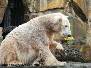 Photo: Knut hat auf der Anlage ein Blatt gefunden ;-)