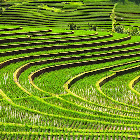Green by Miun Srv - Landscapes Mountains & Hills ( bali,  )