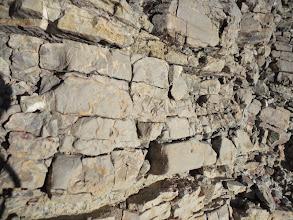 Photo: Geologia: Arenisques micàcies grises (detall)