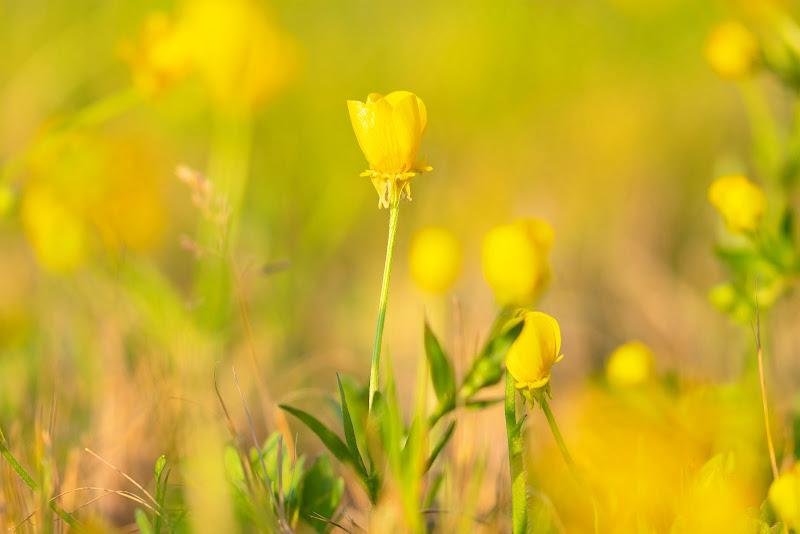 Yellow Spring.  di valentina_mannella