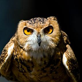 by Grayson Boxx - Animals Birds