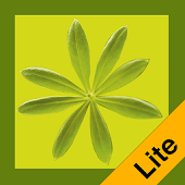 Essbare Wildpflanzen Lite