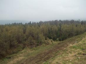 Photo: Krušné hory se zelenají