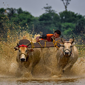 bull race of west bengal by  Bivahasutra Wedding Photography - Sports & Fitness Running